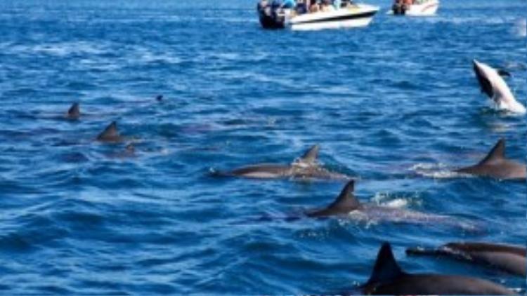 Môi trường biển được bảo vệ rất nghiêm ngặt. Mọi hoạt động làm tổn thương ảnh hưởng đến các loài động thực vật dưới biển đều bị cấm.