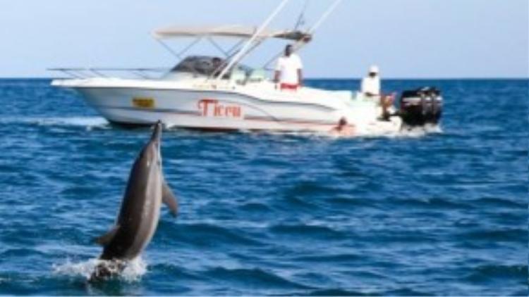 Khi thấy khách đến, các chú cá tự biểu diễn các vòng nhào lộn như một cách chào đón.