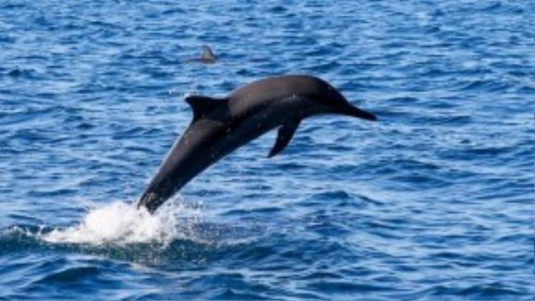 Du khách sẽ có cảm giác phấn khích khi cá heo nhào lộn ở khoảng cách rất gần.