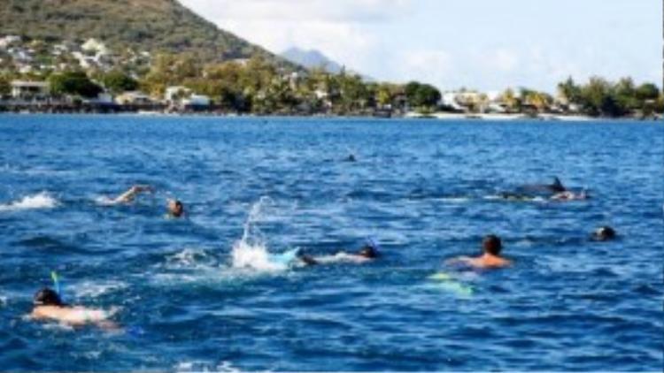 Nhiều người nhảy ùm xuống để bơi cùng loài sinh vật đáng yêu này.