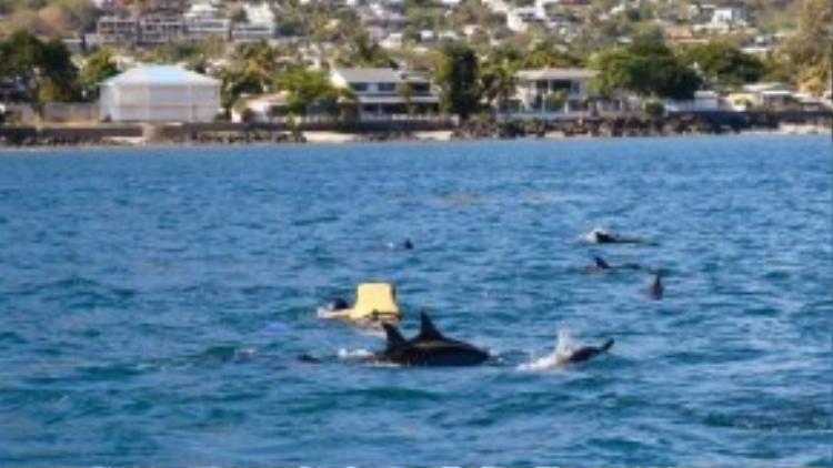 Bên cạnh hàng chục chú cá nổi lên mặt nước, du khách còn có một trải nghiệm khác là đeo áo phao, ống thở để lặn xuống nước, nghe cá hát. Phía dưới có những âm thanh rin rít kỳ lạ lan truyền trong lòng biển.