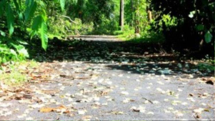 Càng gần đến thác, con đường càng trở nên lãng mạn với những cánh hoa rừng phủ kín mặt đường.