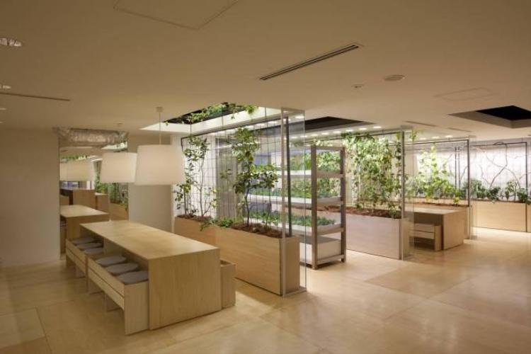 Mãn nhãn với đồng lúa, vườn rau ngay giữa văn phòng ở Nhật