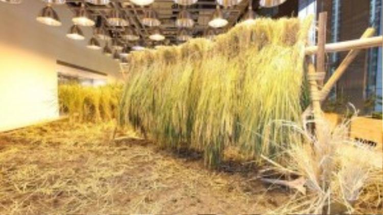 Cảnh tượng thu hoạch lúa tưởng chỉ có ở các miền quê lại xuất hiện ngay trong mộtvăn phòng làm việc tại trung tâm thành phố.
