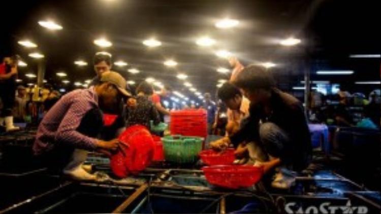 3 giờ sáng, các thương lái từ các chợ trên địa bàn TP HCM đổ về mua thủy hải sản.