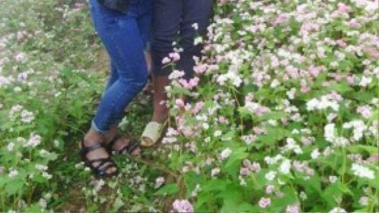 … Và để có những bức ảnh như thế, các bạn sẵn sàng dẫm nát cảnh đồng hoa - Nguồn: FB.