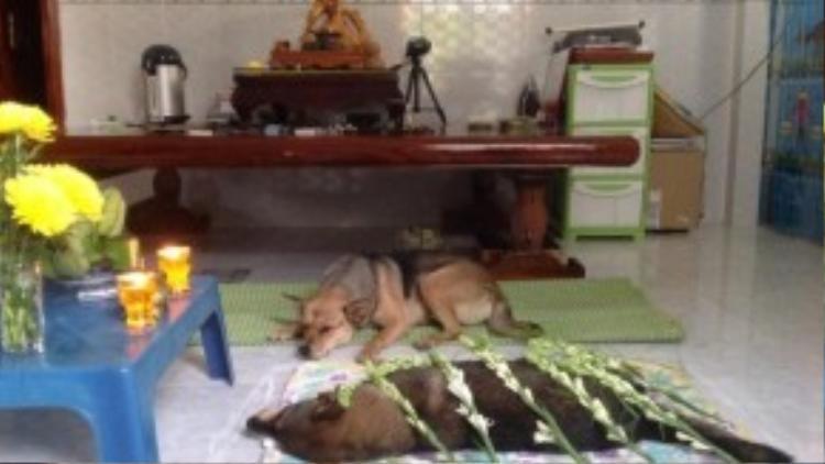 Con gái Cửu Cửu luôn túc trực bên xác mẹ trong suốt thời gian tang lễ diễn ra.