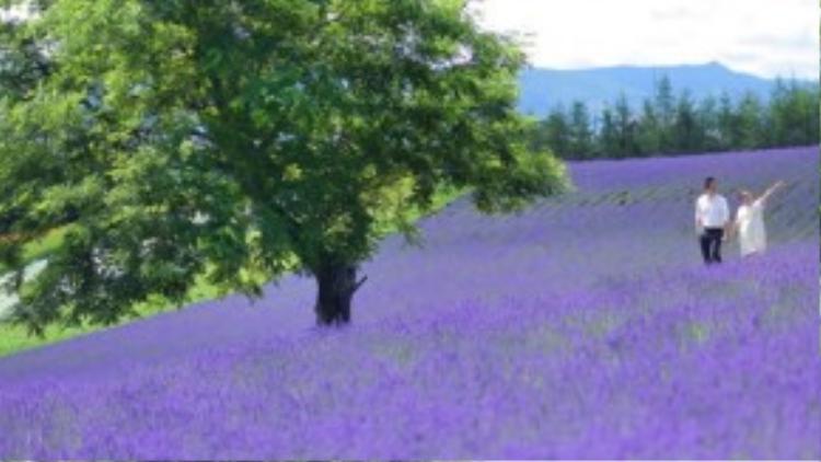 Trước khi đến Hokkaido, Trúc Diễm không nghĩ những cánh đồng hoa lại đẹp tuyệt vời như vậy. Cô từng nghĩ hoa oải hương chỉ có ở châu Âu mà thôi.