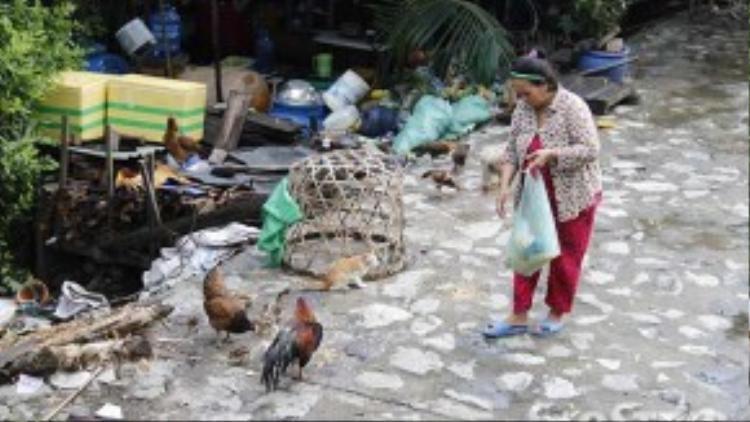 Nguồn thu nhập cho My được đến trường phụ thuộc vào bầy gà người dân xung quanh cho.