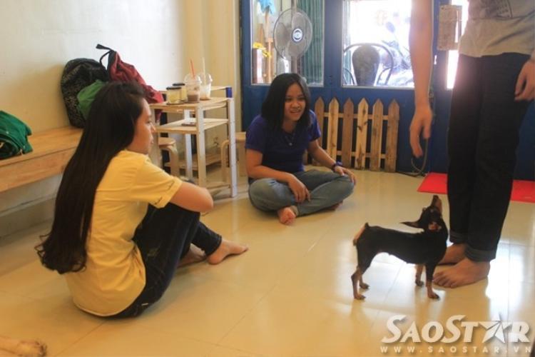 Vụ 15 chú chó bị đầu độc: Bất ngờ với clip tố cáo hung thủ