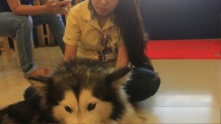 Một số bạn bè, dẫn theo các chú cún đến chơi với Hoàng Duy giúp anh vượt qua những ngày đau buồn.