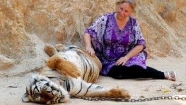 Người du khách nước ngoài này còn vuốt ve cho con hổ như thể nó là con chó, con mèo vậy.