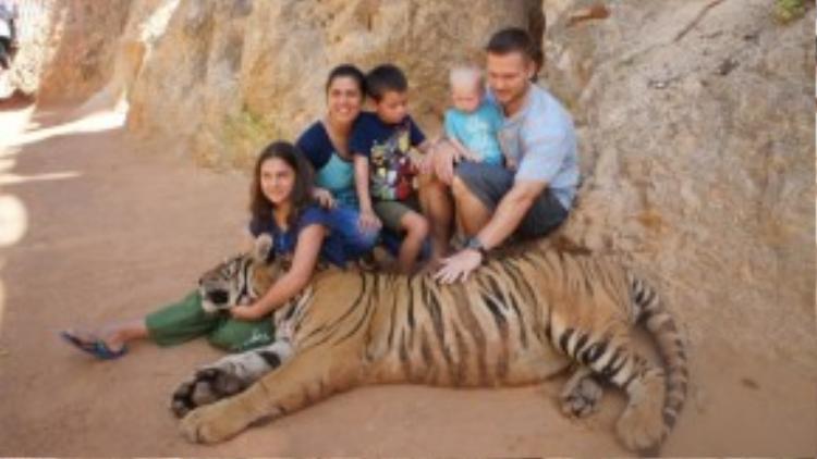 Thậm chí, bố mẹ còn cho cả con mình lại gần sờ vào hổ.
