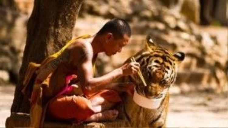 Thực đơn ăn uống cho những con hổ rất nghèo nàn. Chúng thường chỉ được ăn đi ăn lại một số loại thức ăn không đầy đủ dinh dưỡng. Vì thế chúng bị thừa cân và không thể phát triển khỏe mạnh lâu dài.