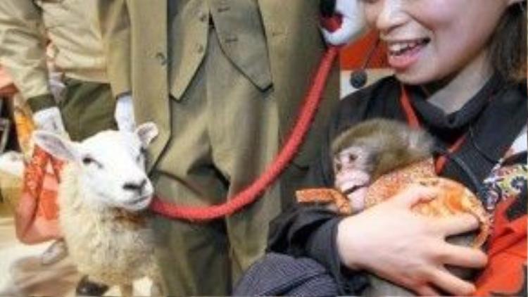 Người dân Osaka, Nhật Bản làm lễ chuyển giao năm. Trong ảnh, người ta mang tới buổi lễ một chú dê - tượng trưng cho năm 2015 và một chú khỉ - tượng trưng cho năm 2016.