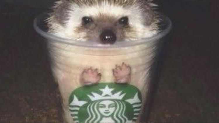 Cốc cà phê Starbucks thượng hạng đây!