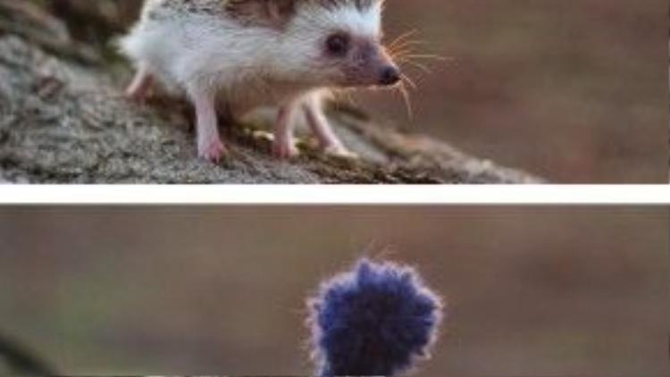 Chú nhím mùa đông được chủ tận tình đan hẳn cho một chiếc mũ len.