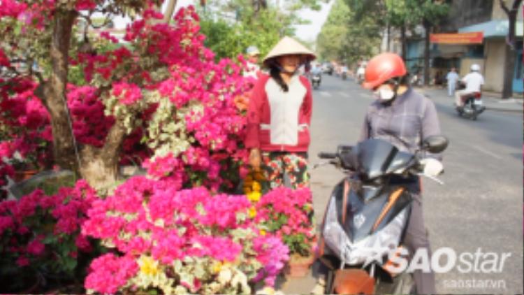 """Chị Chi, chủ một vườn hoa ở Cái Mơn (Bến Tre) đang cố gắng thuyết phục khách mua cây. Chị cho biết: """"Mọi năm, tầm 24 và 25 Tết này bán rất chạy. Nhưng năm nay bán lại hơi chậm, lượng khách mua rất ít""""."""