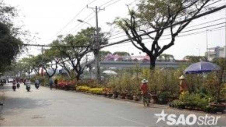 Tuy nhiên, chợ hoa bên sông đình đám này những năm gần đây lại ngày một vắng bóng khách.