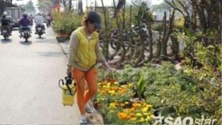 Do thời tiết Sài Gòn những ngày giáp Tết nắng nóng nên người trồng hoa phải liên tục tưới nước.