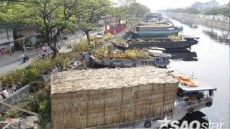 Những chiếc thuyền hoa nằm san sát nhau trên sông. Hoa và cây kiểng được vận chuyển một phần lên bờ để chào mời khách mua.