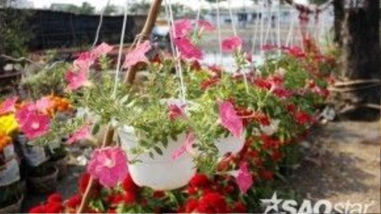 Các loại hoa và cây kiểng phong phú, đa dạng.
