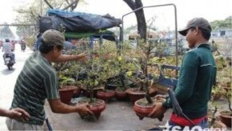 Tình hình buôn bán tại đây không khả quan nên nhiều chủ vườn còn thuê xe chở cây đến những địa điểm khác trong thành phố để bán.