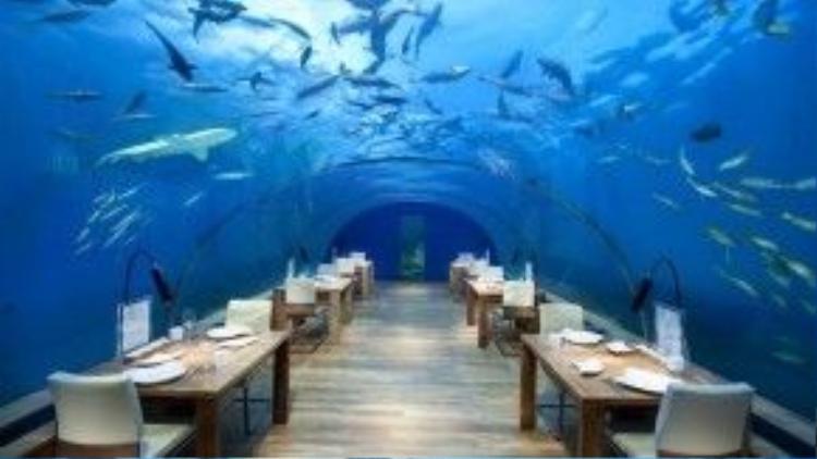 Nhà hàng dưới biểu Ithaa tại quần đảoMaldives là một kiệt tác có một không hai. Ngồi trong nhà hàng xẻ dọc biển này, thực khách có thể ngắm nhìn những đàn cá tung tăng bơi lội qua vòm kính cong 270 độ.