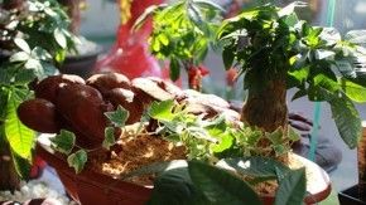 Các nghệ nhân mất ít nhất nửa năm để vun trồng một cây nấm linh chi bonsai tinh xảo thế này.