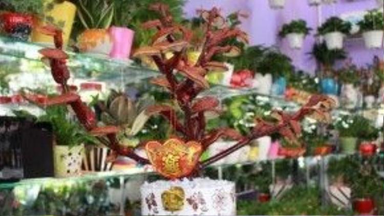 Khách muốn mua nấm linh chi bonsai phải đặt trước vàitháng.