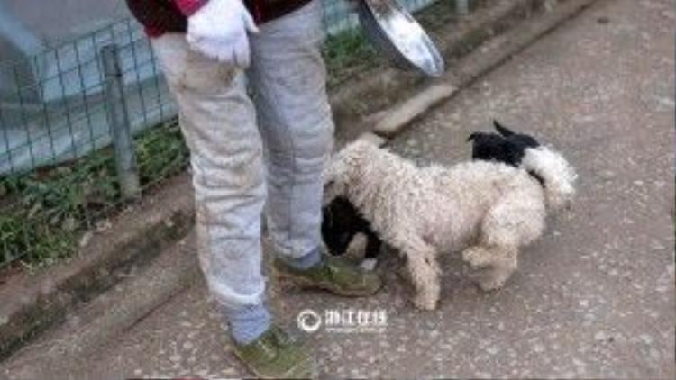 Những chú chó cảm nhận được tình thương của bà dành cho chúng nên suốt ngày quẩn chân và đi lẽo đẽo theo bà.