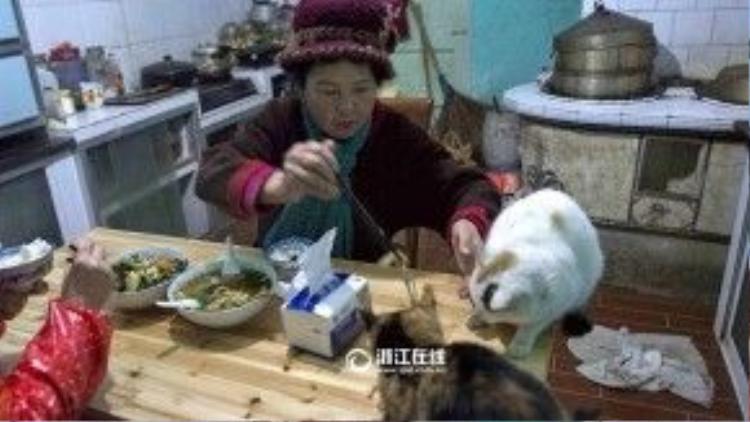 Bà mua một mảnh đất trên vùng núi thành phố Ôn Châu để xây dựng ngôi nhà tình thương cho chó mèo.