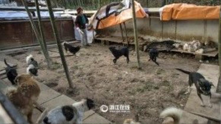 Các chú chó có hẳn một cái sân rộng lớn để nô đùa thỏa thích.