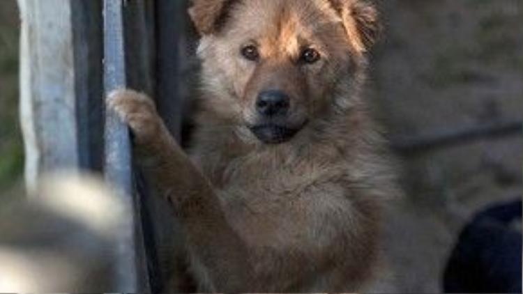 Nhiều người dân Trung Quốc và các tổ chức bảo vệ động vật ở nước này rất cảm phục lòng tốt của bà. Những chú chó, mèo đáng thương này cuối cùng cũng đã tìm được người yêu thương mình.