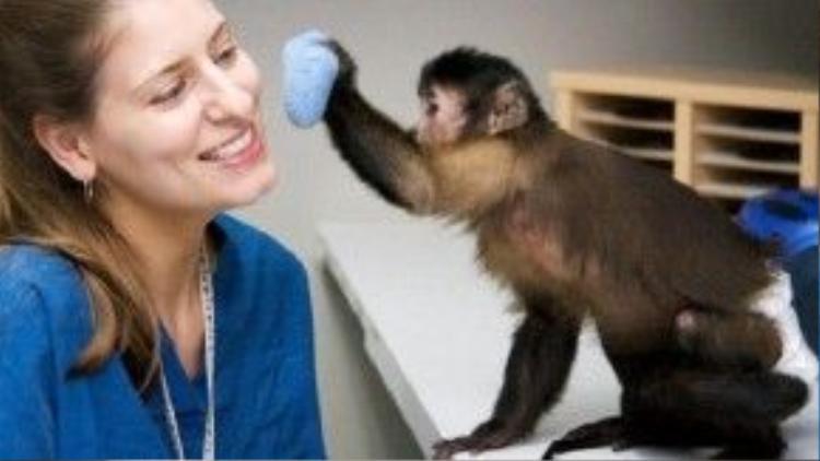 Chú khỉ đang dùng một miếng vải… gãi ngứa trên mặt cho huấn luyện viên. Nhiều người bị liệt hai tay sẽ rất cần có người giúp chăm sóc mình từng li từng tí như thế này.