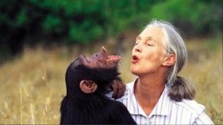 Sau khi hoàn thành luận án có chủ đề về tinh tinh, Jane tiếp tục quay lại Tanzania để tìm hiểu loài động vật này. Trong suốt quá trình ở trong rừng, bà đã trở nên gần gũi với chúng tới mức chúng cho phép bà được sinh hoạt cùng bầy trong vòng 2 năm trời. Tới lúc Frodo một con tinh tinh đực vốn không ưa Jane lên làm thủ lĩnh của bầy, nó đã quyết định đuổi Jane ra khỏi cuộc sống của chúng. Từ đó, bà chỉ có thể đứng từ xa quan sát bầy tinh tinh này mà thôi.