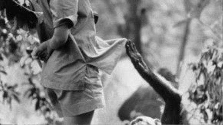"""Từ một cô gái trẻ không có tí kiến thức gì về khoa học, chỉ có niềm đam mê mãnh liệt với loài linh trưởng và """"lục địa đen"""", Jane đã tự mình vươn lên, dành nhiều thời gian bên cạnh bầy tinh tinh ở Tanzania và phát hiện ra được nhiều điều ở loài động vật này mà những nhà khoa học giỏi giang, có tiếng khác còn chưa tìm ra nổi."""