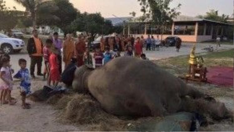 Nhiều người dân và nhà sư tới chôn cất con voi già.