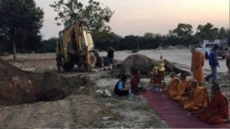 Nhiều nhà sư đến từ chùa Bang Lamung cũng đã đến để cầu siêu cho con voi đáng thương.
