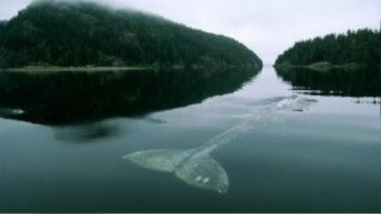Các nhà khoa học cho biết mắt của cá voi có thể chịu được áp lực tương đương lực một chiếc xe tải đè lên nó tạo ra.