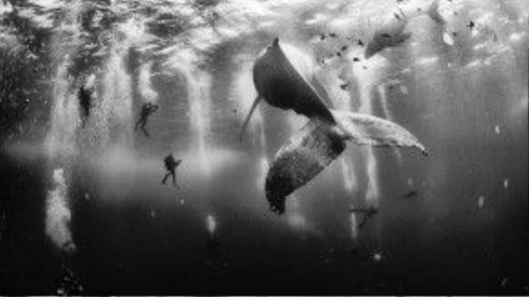 Cá voi là loài động vật có kích thước lớn nhất trên trái đất hiện nay.