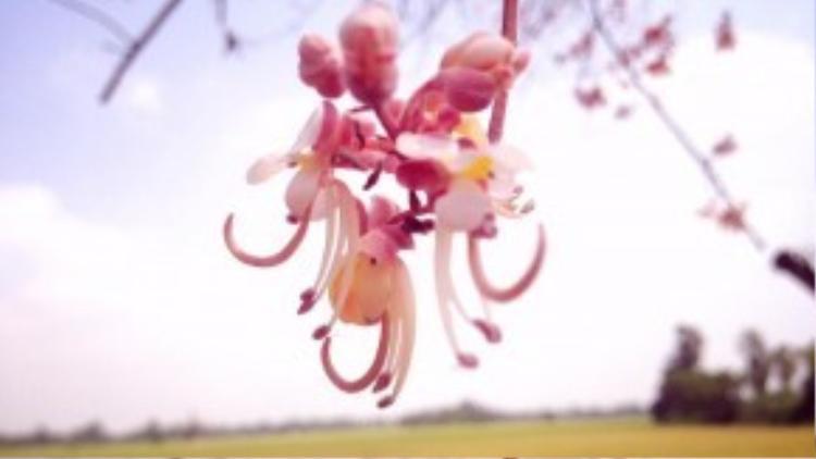 Ngoài ra, hình tượng bông ô môi cũng xuất hiện nhiều trong những tác phẩm văn học, các bài ca vọng cổ hoặc nhạc trữ tình.