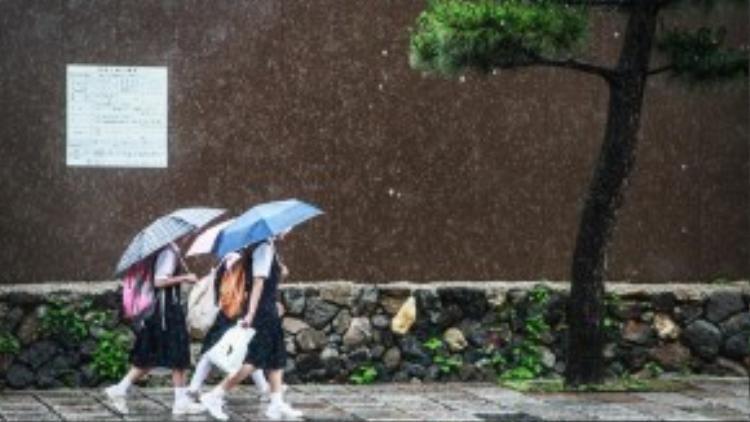 Các nữ sinh Nhật Bản che ô đi đến trường dưới cơn mưatạiKyotovào tháng 6/2013.