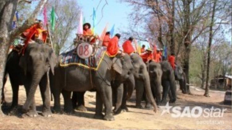 Giữa tháng 3/2016, người dân đồng bào các tỉnh Tây Nguyên lại rộn ràng tổ chức lễ hội cùng nhiều nghi thức truyền thống để cầu mong một năm an lành mạnh khỏe, mùa màng tươi tốt tại Buôn Đôn, tỉnh Đắc Lắc. Lễ hội quy tụ rất nhiều chú voi sinh sống ở khu vực Tây Nguyên.