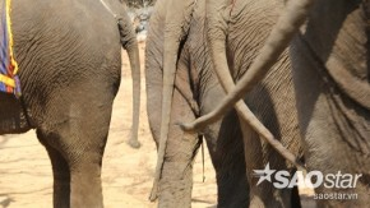 Người dân và đặc biệt là chủ cửa hàng lưu niệm tại Buôn Đôn cho rằng lông voi trừ tà, dùng xỉa răng thì trị được sâu răng. Mang lông đuôi voi trong người sẽ tránh được những nguy hiểm, âm khí, tai họa dọc đường đi, giúp chủ nhân khỏe mạnh…
