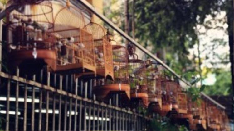 Tọa lạc tại quận 10, con đường Hưng Long chỉ vỏn vẹn dài 92m nhưng lại sở hữu những nét độc đáo riêng của Sài Gòn bởi đây là nơi tụ họp quen thuộc của giới yêu thích chim cảnh mỗi dịp cuối tuần.