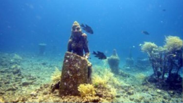 Trải nghiệmkết hợp 2 trong 1 - lặn biển vàkhám phá môi trường đại dươngtạo nhiều hứng thú cũng như động lực chonhững ai yêu bộ môn lặn có thể nhanh chóng làm chủ được sở thích của mình.