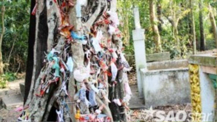 Nhiều người đến chùa cho rằng bản thân đang gặp phải nhiều điều xui rủi nên thắp hương xong, túi nylon đựng nhang được họ cột lên các nhánh cây với hàm ý bỏ cái những cái không may mắn cho cây trong chùa.