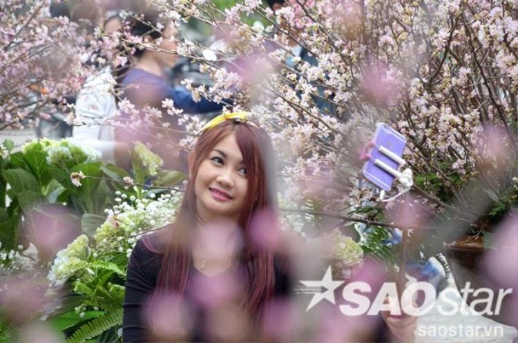 Mãn nhãn với vẻ đẹp của 10.000 cành anh đào Nhật Bản giữa thủ đô Hà Nội