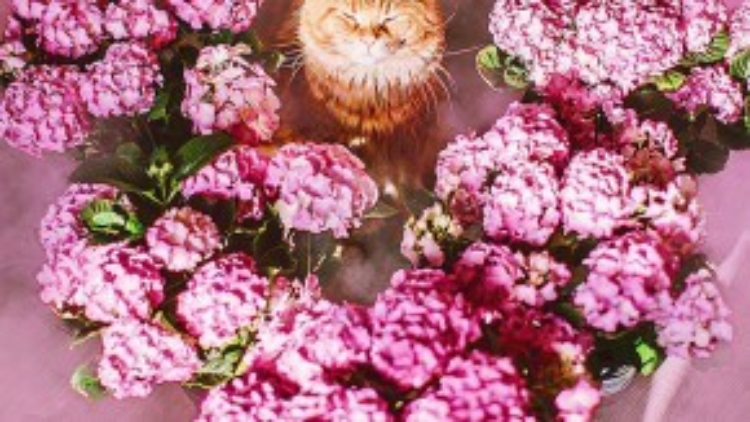 """Có thể nói, Kotleta chính là một soái ca điển hình trong họ nhà mèo với tính cách """"ngoài lạnh, trong nóng""""."""